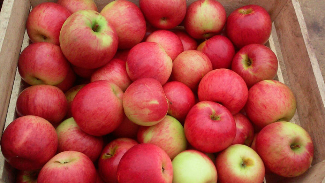 Apple Varieties at Glenwood Orchard