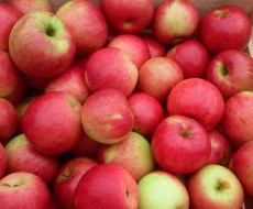 Glenwood Orchard has your favorite apples!