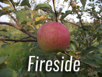 Fireside Apples Available at Glenwood Orchard