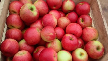 Beautiful Glenwood Orchard Apples