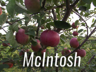 McIntosh Apples Available at Glenwood Orchard