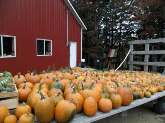Glenwood Orchard Pumpkins