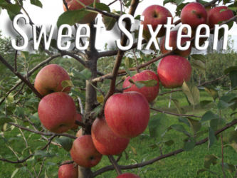 Sweet Sixteen Apples Available at Glenwood Orchard